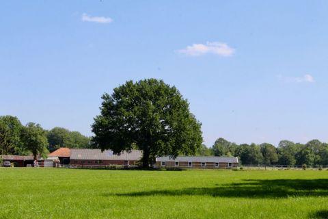 De Bosuil Vakantiebungalow Winterswijk buiten c